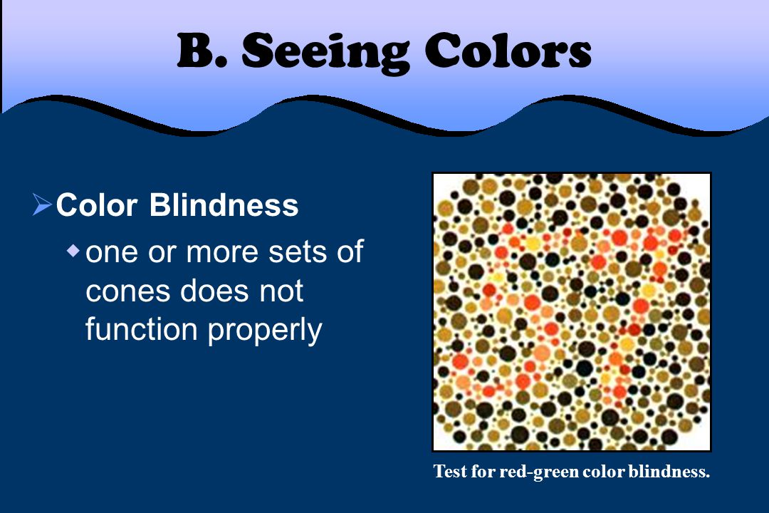 B. Seeing Colors  Color Blindness  one or more sets of cones does not function properly Test for red-green color blindness.