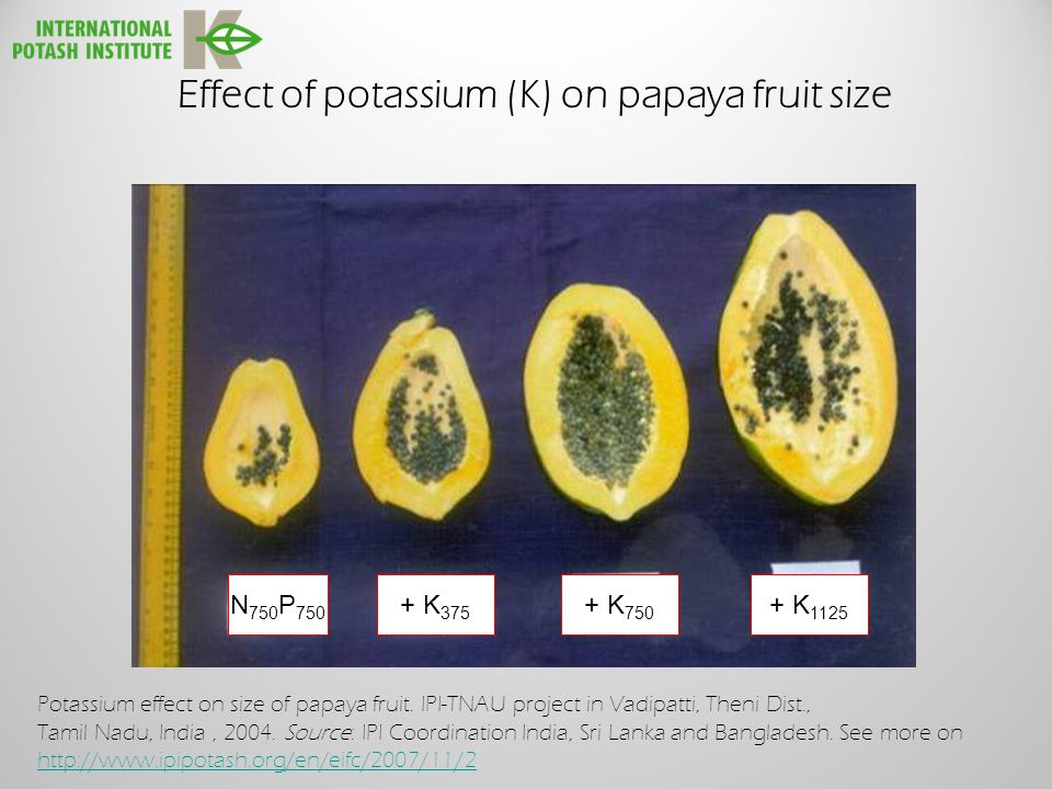 Effect of potassium (K) on papaya fruit size N 750 P 750 + K 375 + K 750 + K 1125 Potassium effect on size of papaya fruit.