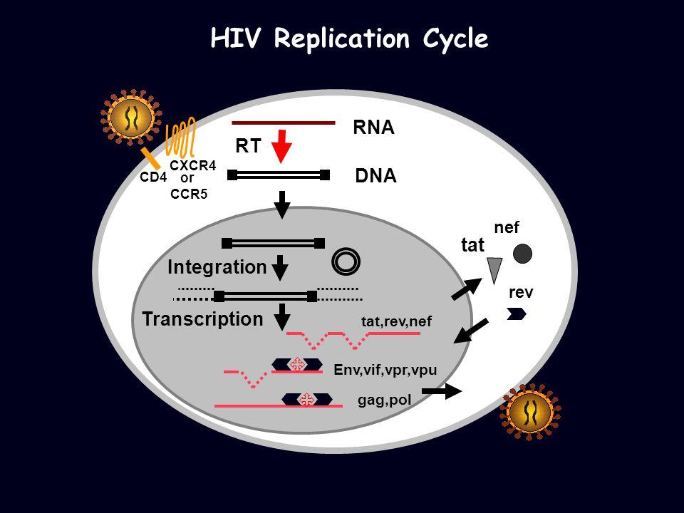 HIV Replication Cycle RNA DNA RT tat,rev,nef Env,vif,vpr,vpu gag,pol Transcription Integration rev tat nef CD4 CXCR4 or CCR5