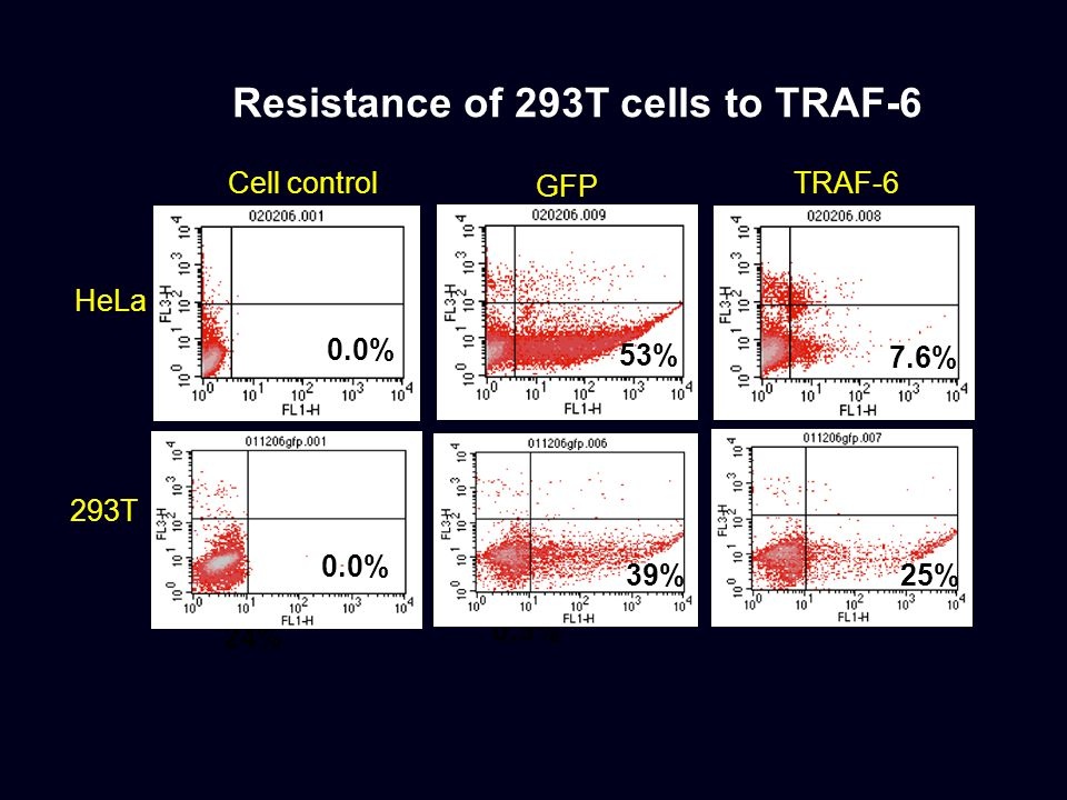 Resistance of 293T cells to TRAF-6 HeLa GFP TRAF-6 0.0% 53% 24% 0.5% 7.6% 293T 0.0% 39% 25% Cell control