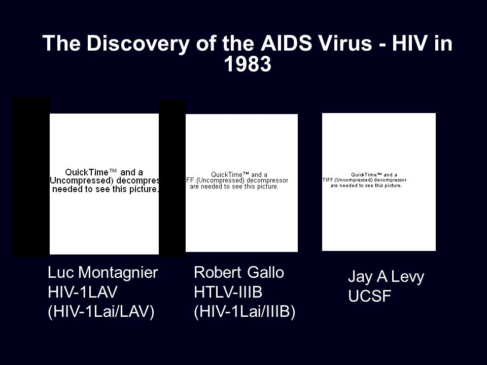 The Discovery of the AIDS Virus - HIV in 1983 Luc Montagnier HIV-1LAV (HIV-1Lai/LAV) Robert Gallo HTLV-IIIB (HIV-1Lai/IIIB) Jay A Levy UCSF
