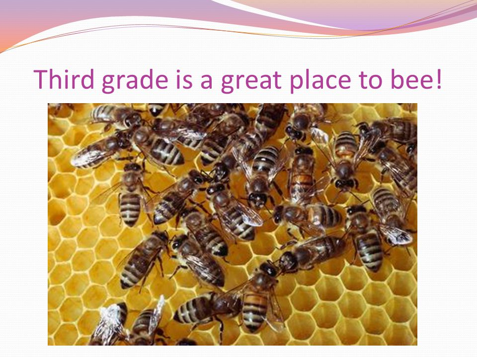 Third grade is a great place to bee!