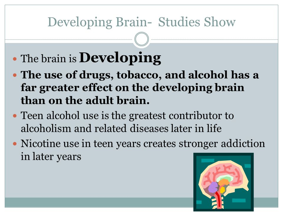 Developing Brain- Studies Show The brain is Developing The use of drugs, tobacco, and alcohol has a far greater effect on the developing brain than on