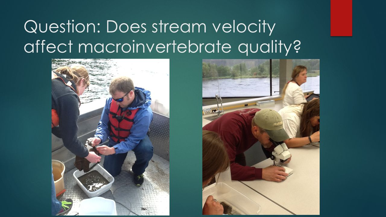 Question: Does stream velocity affect macroinvertebrate quality?