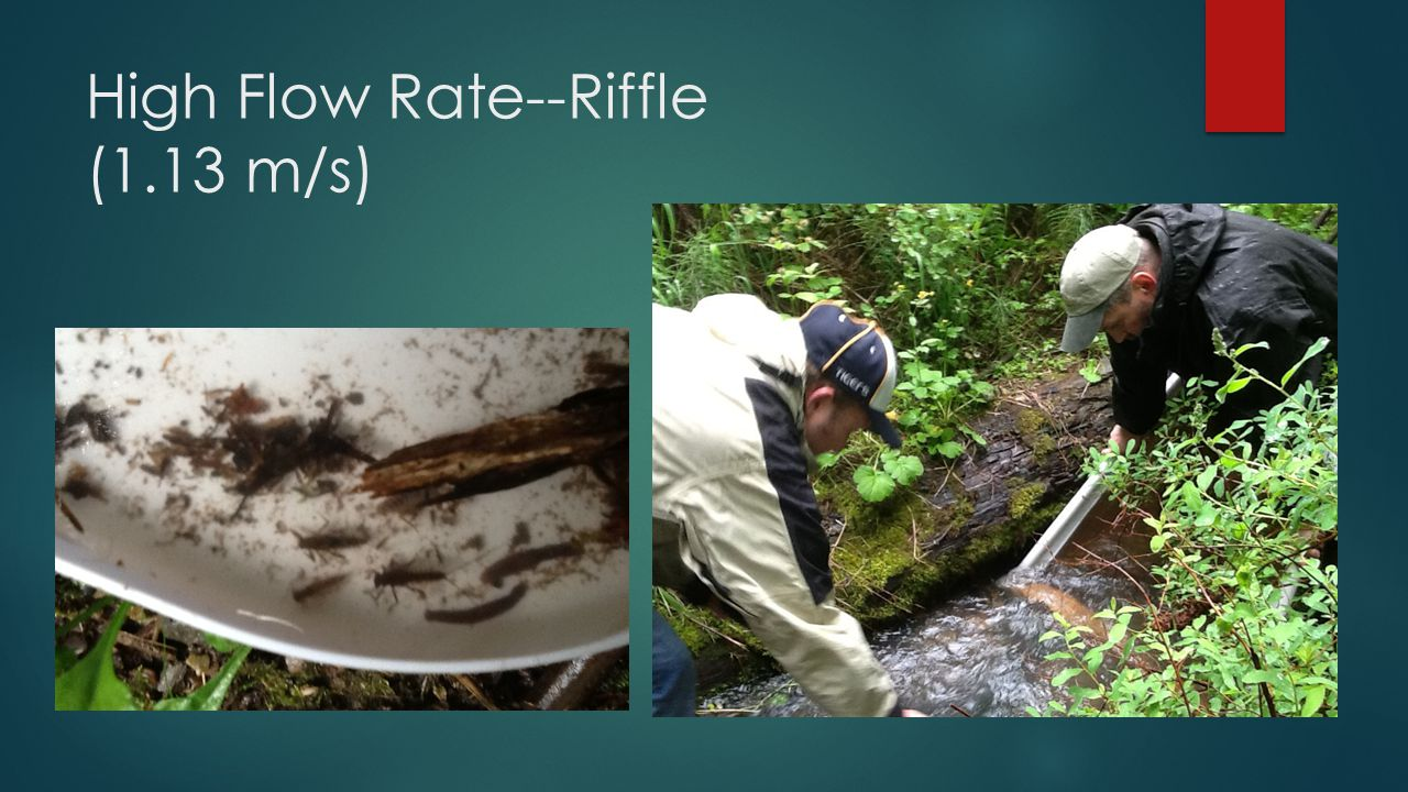 High Flow Rate--Riffle (1.13 m/s)