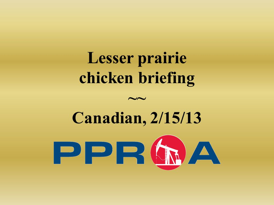 Lesser prairie chicken briefing ~~ Canadian, 2/15/13