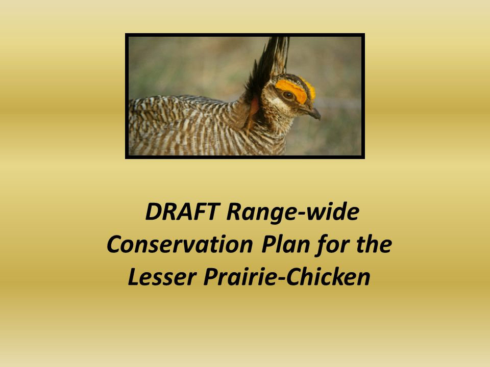 DRAFT Range-wide Conservation Plan for the Lesser Prairie-Chicken