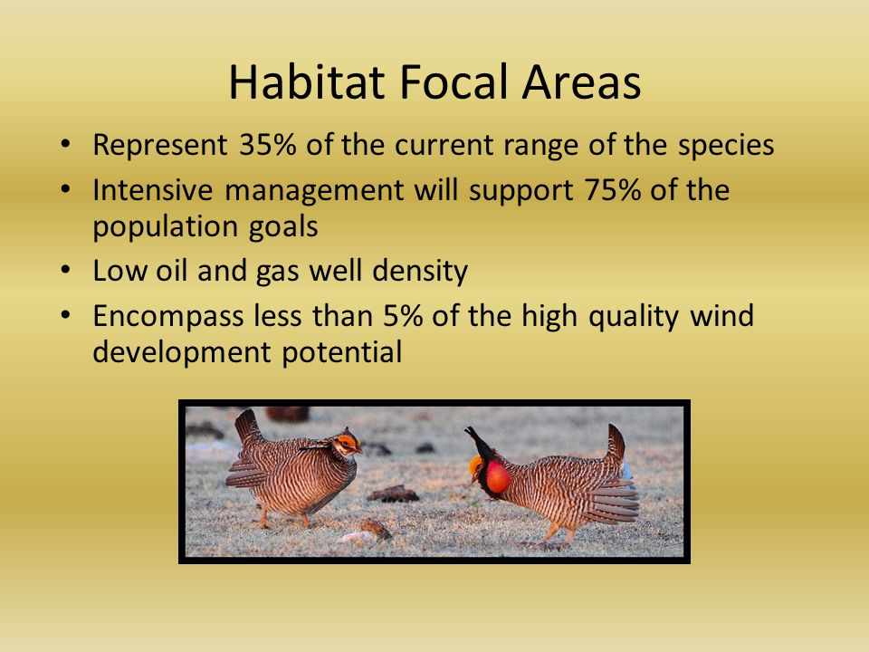 Habitat Focal Areas Represent 35% of the current range of the species Intensive management will support 75% of the population goals Low oil and gas well density Encompass less than 5% of the high quality wind development potential