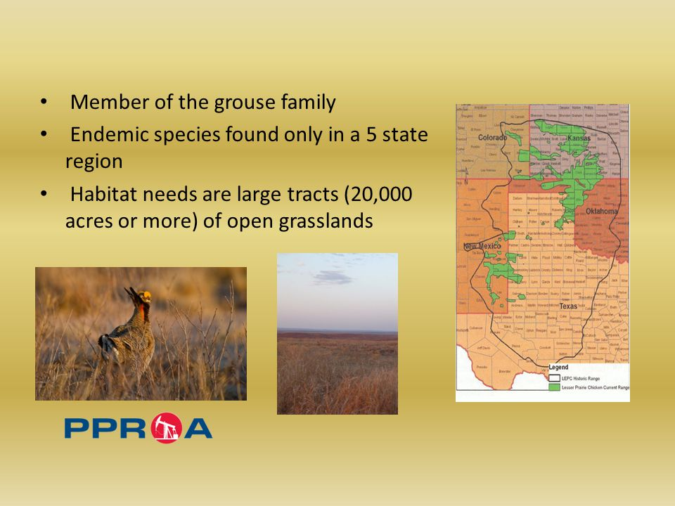 Member of the grouse family Endemic species found only in a 5 state region Habitat needs are large tracts (20,000 acres or more) of open grasslands