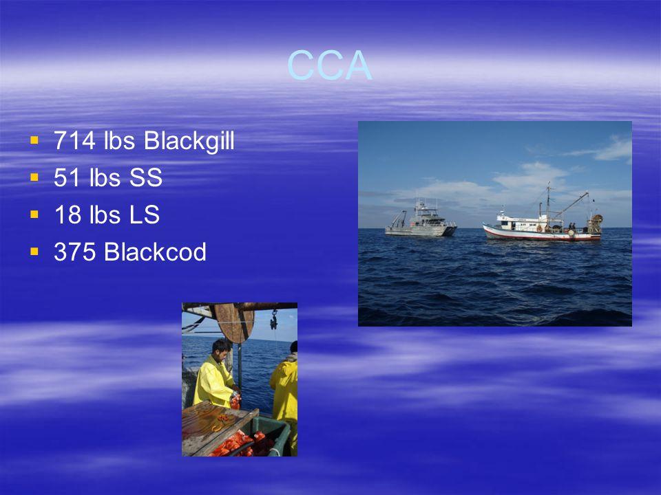 CCA   714 lbs Blackgill   51 lbs SS   18 lbs LS   375 Blackcod