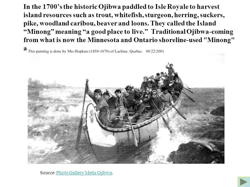 In the 1700's the historic Ojibwa paddled to Isle Royale to harvest island resources such as trout, whitefish, sturgeon, herring, suckers, pike, woodland caribou, beaver and loons.