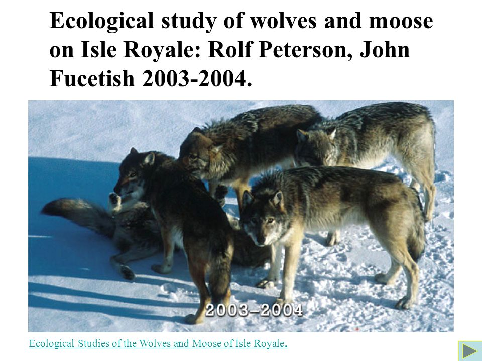 Ecological study of wolves and moose on Isle Royale: Rolf Peterson, John Fucetish 2003-2004.