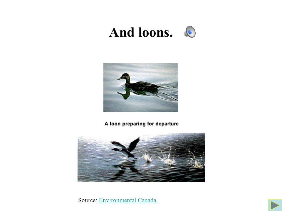 And loons. Source: Environmental Canada.Environmental Canada.