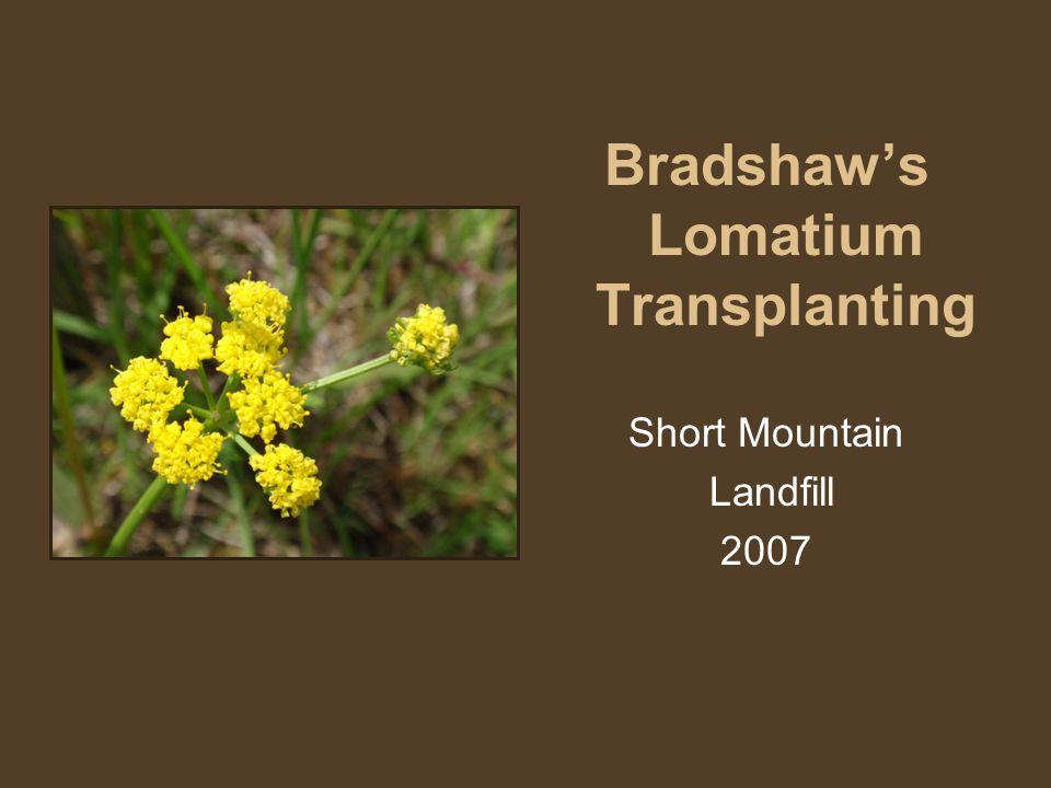 Bradshaw's Lomatium Transplanting Short Mountain Landfill 2007
