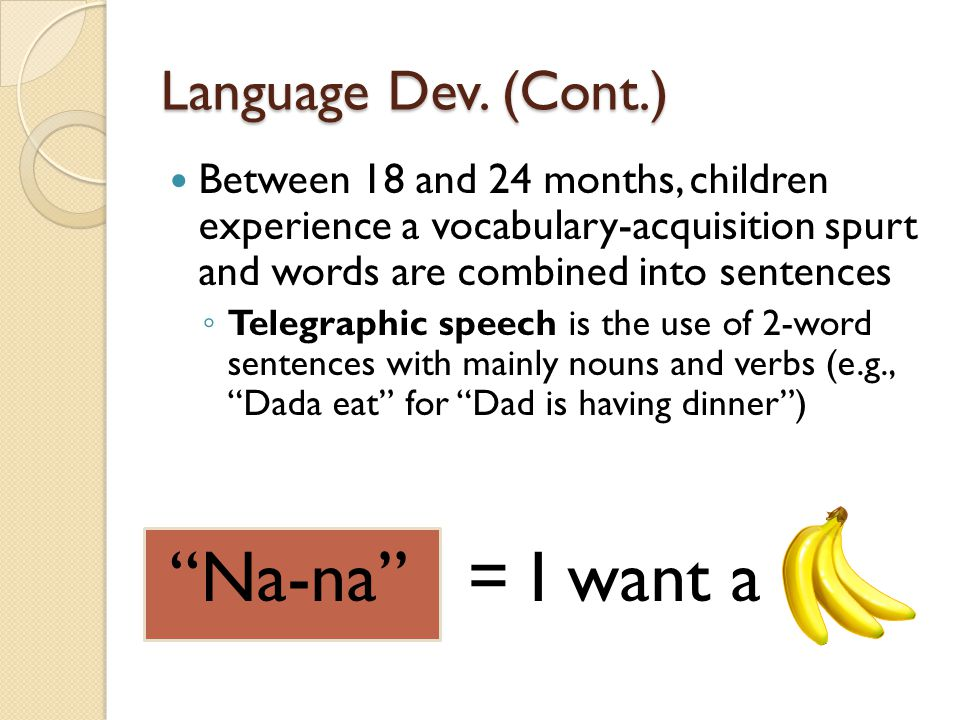 Language Dev. (Cont.) Between 18 and 24 months, children experience a vocabulary-acquisition spurt and words are combined into sentences ◦ Telegraphic