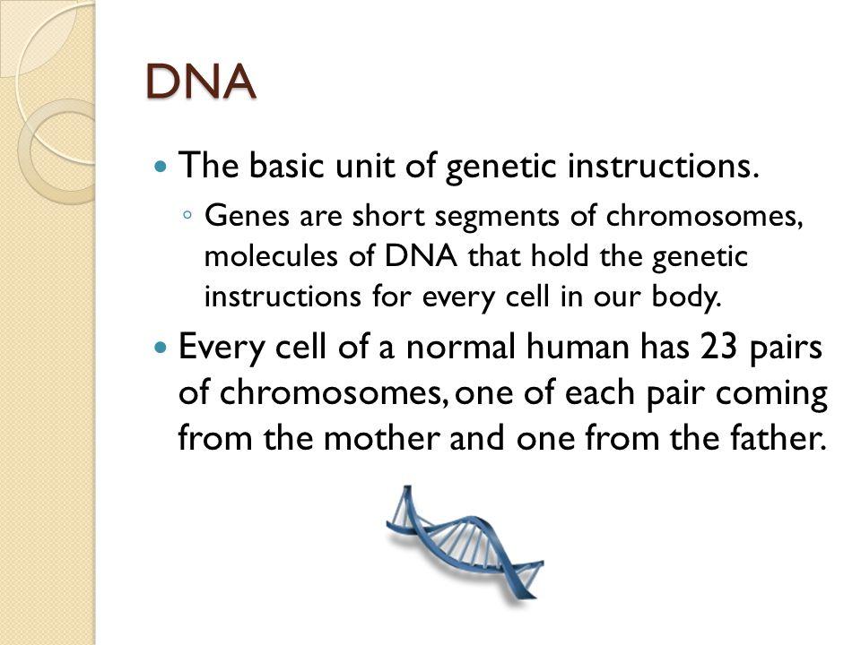 DNA The basic unit of genetic instructions. ◦ Genes are short segments of chromosomes, molecules of DNA that hold the genetic instructions for every c