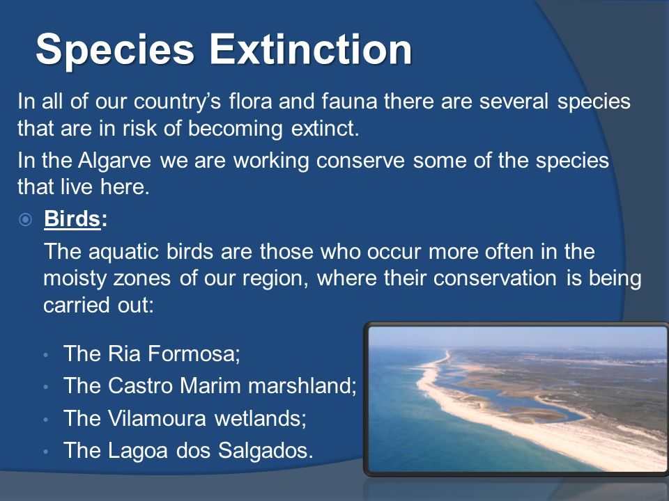 Species Extinction In all of our country's flora and fauna there are several species that are in risk of becoming extinct.