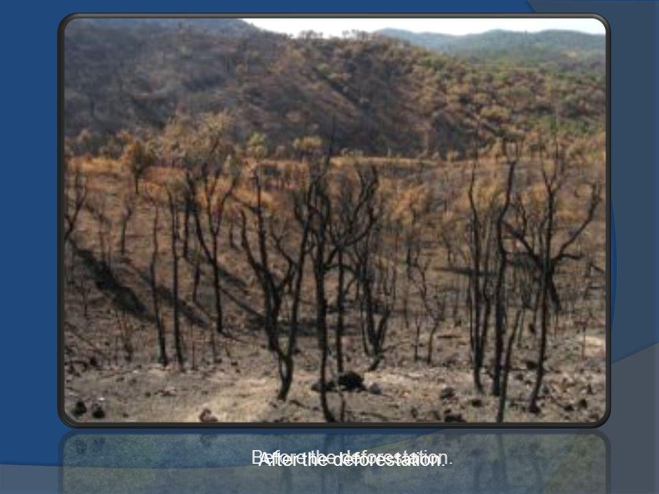 Before the deforestation. After the deforestation.