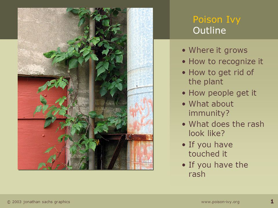 © 2003 jonathan sachs graphics www.poison-ivy.org 1 Poison Ivy Outline Where it grows How to recognize it How to get rid of the plant How people get it What about immunity.
