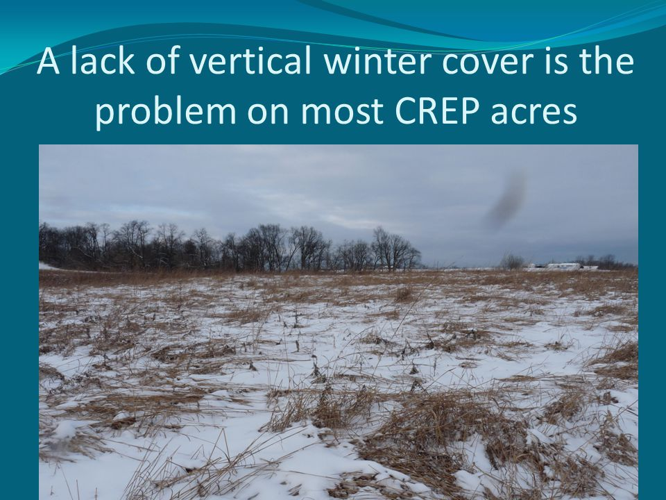 A lack of vertical winter cover is the problem on most CREP acres