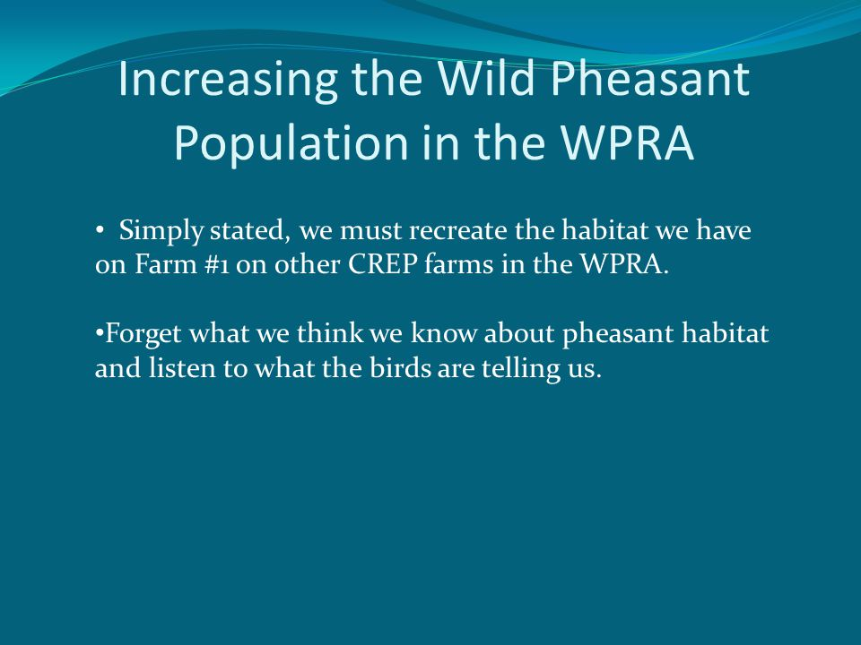 Increasing the Wild Pheasant Population in the WPRA Simply stated, we must recreate the habitat we have on Farm #1 on other CREP farms in the WPRA.