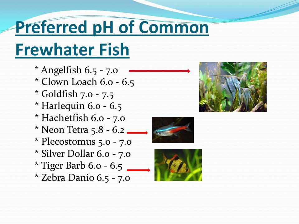 Preferred pH of Common Frewhater Fish * Angelfish 6.5 - 7.0 * Clown Loach 6.0 - 6.5 * Goldfish 7.0 - 7.5 * Harlequin 6.0 - 6.5 * Hachetfish 6.0 - 7.0 * Neon Tetra 5.8 - 6.2 * Plecostomus 5.0 - 7.0 * Silver Dollar 6.0 - 7.0 * Tiger Barb 6.0 - 6.5 * Zebra Danio 6.5 - 7.0