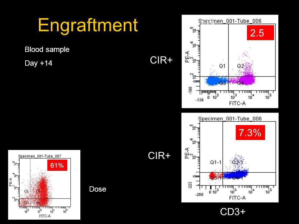 1.1% CD3 2.5 % Engraftment Blood sample Day +14 Dose 61% 7.3% CIR+ CD3+