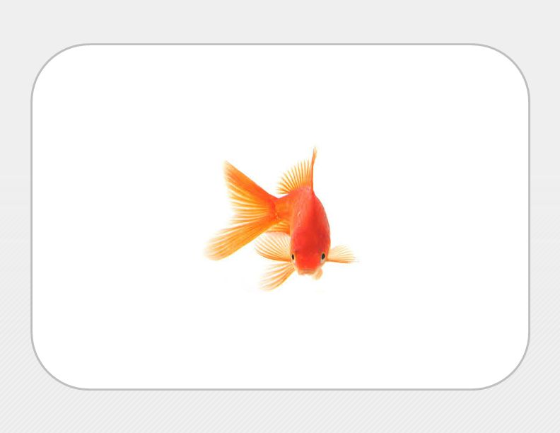 What… is the attention span of a typical goldfish?