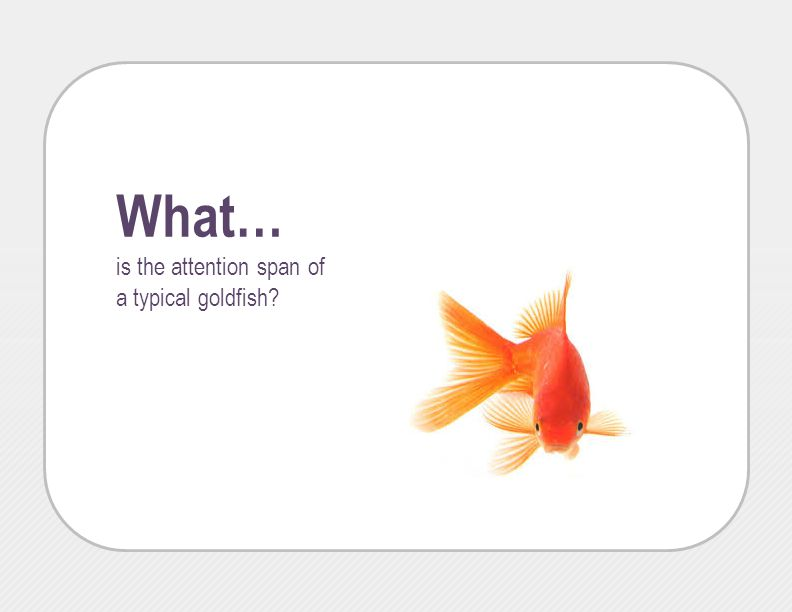 What… is the attention span of a typical goldfish