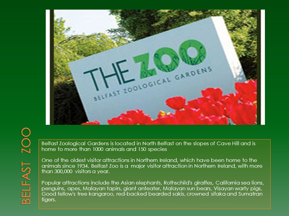Belfast Zoological Gardens is located in North Belfast on the slopes of Cave Hill and is home to more than 1000 animals and 150 species One of the old