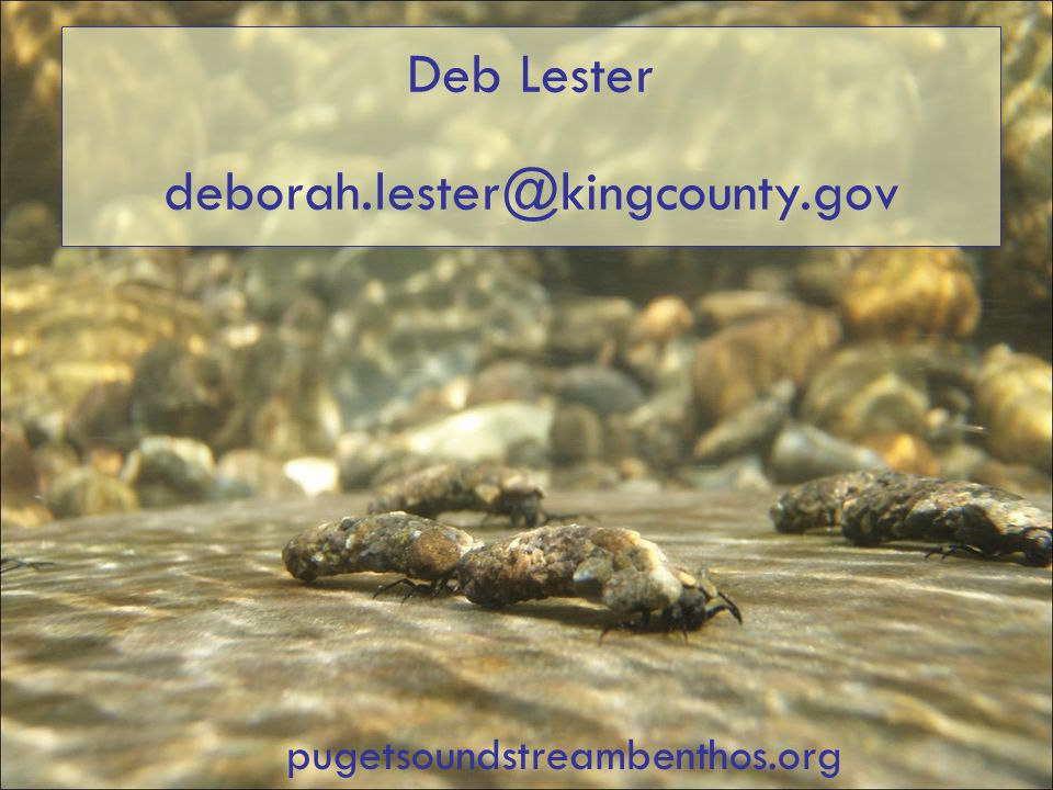 Deb Lester deborah.lester@kingcounty.gov pugetsoundstreambenthos.org