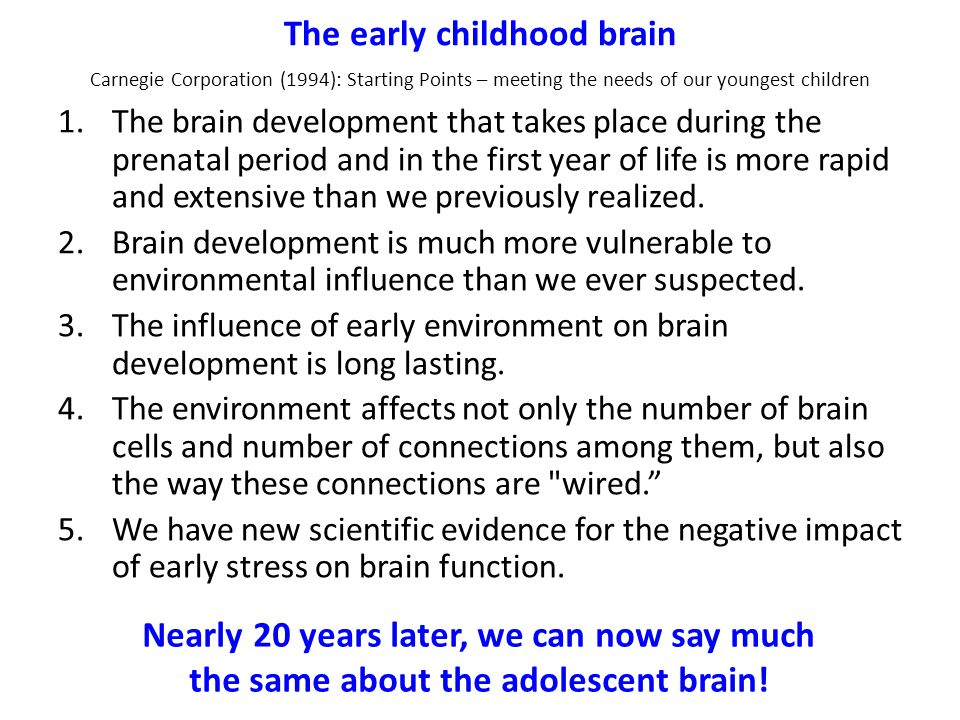 The early childhood brain 1.The brain development that takes place during the prenatal period and in the first year of life is more rapid and extensive than we previously realized.