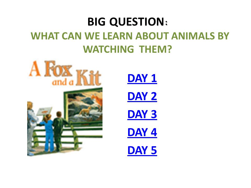 : BIG QUESTION : WHAT CAN WE LEARN ABOUT ANIMALS BY WATCHING THEM? DAY 1 DAY 2 DAY 3 DAY 4 DAY 5