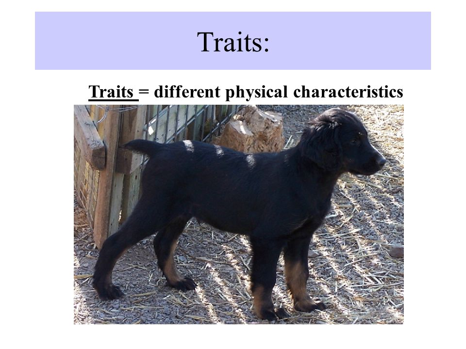 Traits: Traits = different physical characteristics