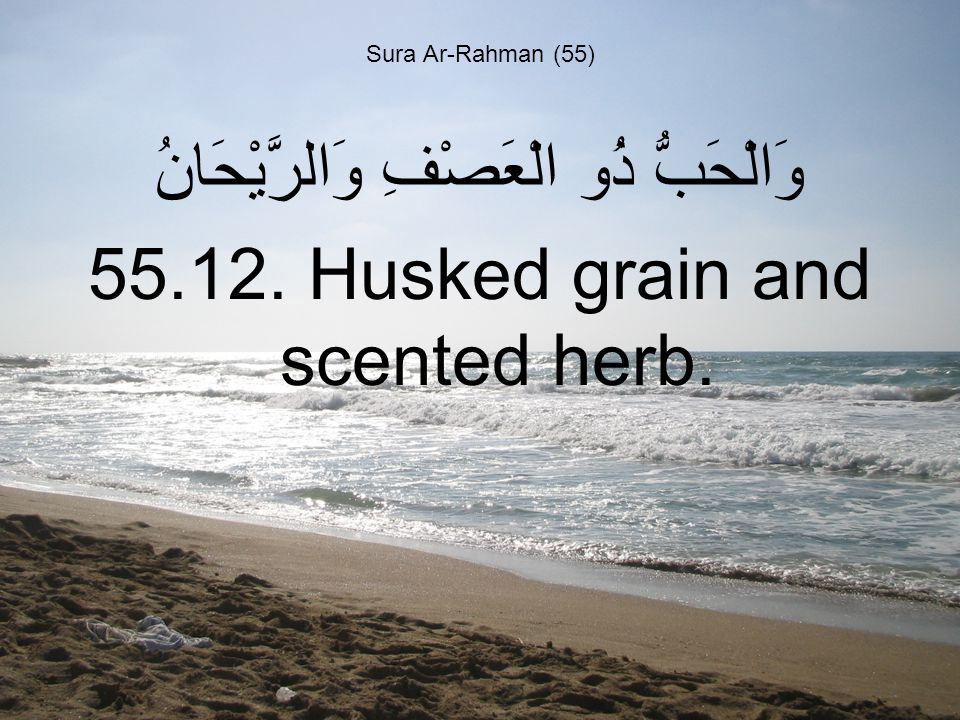 Sura Ar-Rahman (55) وَالْحَبُّ ذُو الْعَصْفِ وَالرَّيْحَانُ 55.12. Husked grain and scented herb.