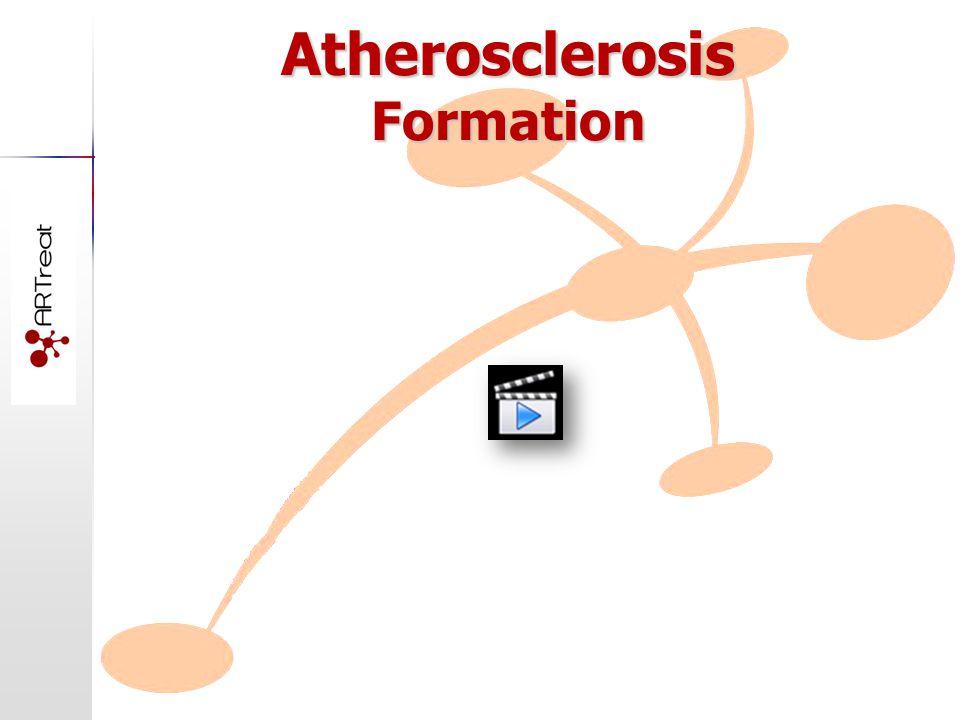 Atherosclerosis Formation