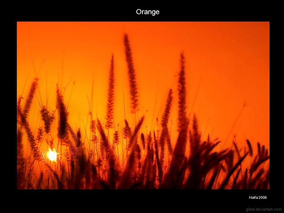 gilad.deviantart.com Orange Haifa 2006