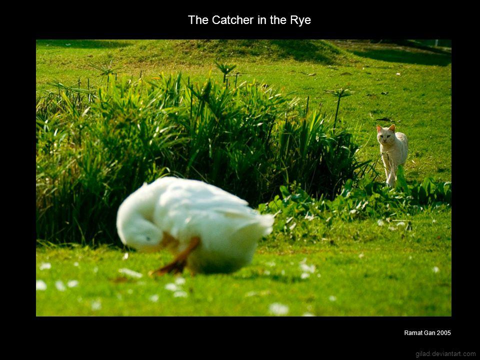 gilad.deviantart.com The Catcher in the Rye Ramat Gan 2005
