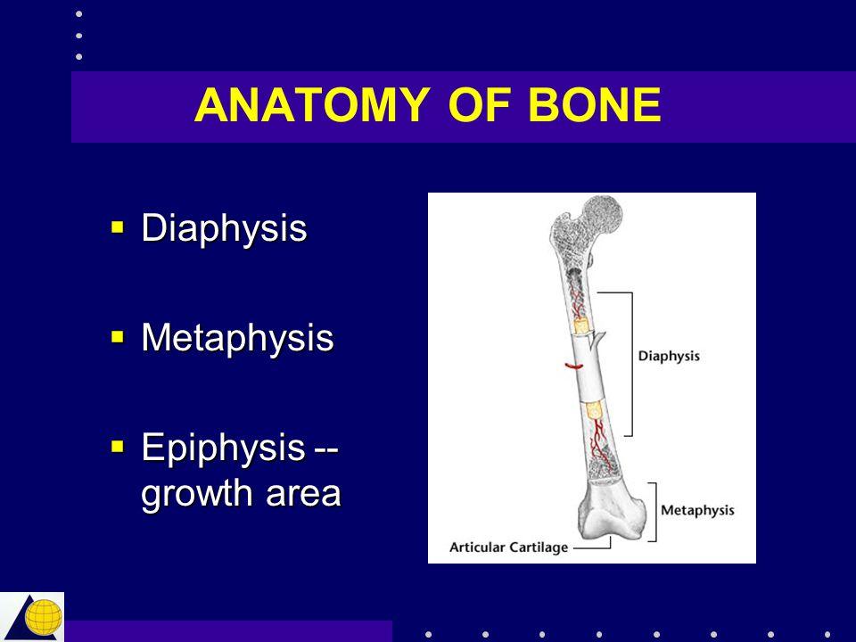  Diaphysis  Metaphysis  Epiphysis -- growth area ANATOMY OF BONE