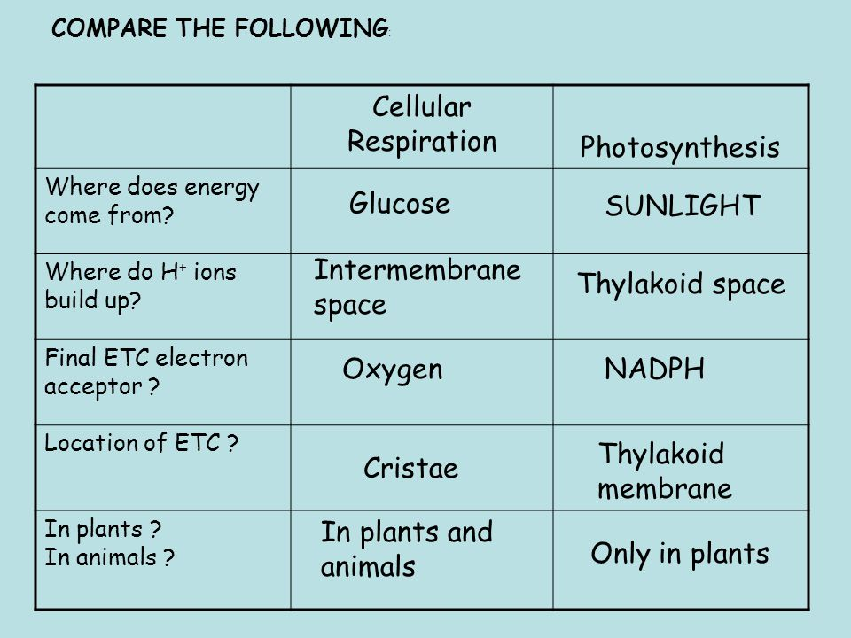 Cellular Respiration Photosynthesis Where does energy come from.