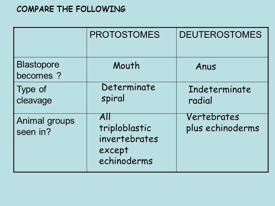 COMPARE THE FOLLOWING : Mouth Anus Determinate spiral Indeterminate radial Vertebrates plus echinoderms All triploblastic invertebrates except echinoderms PROTOSTOMESDEUTEROSTOMES Blastopore becomes .