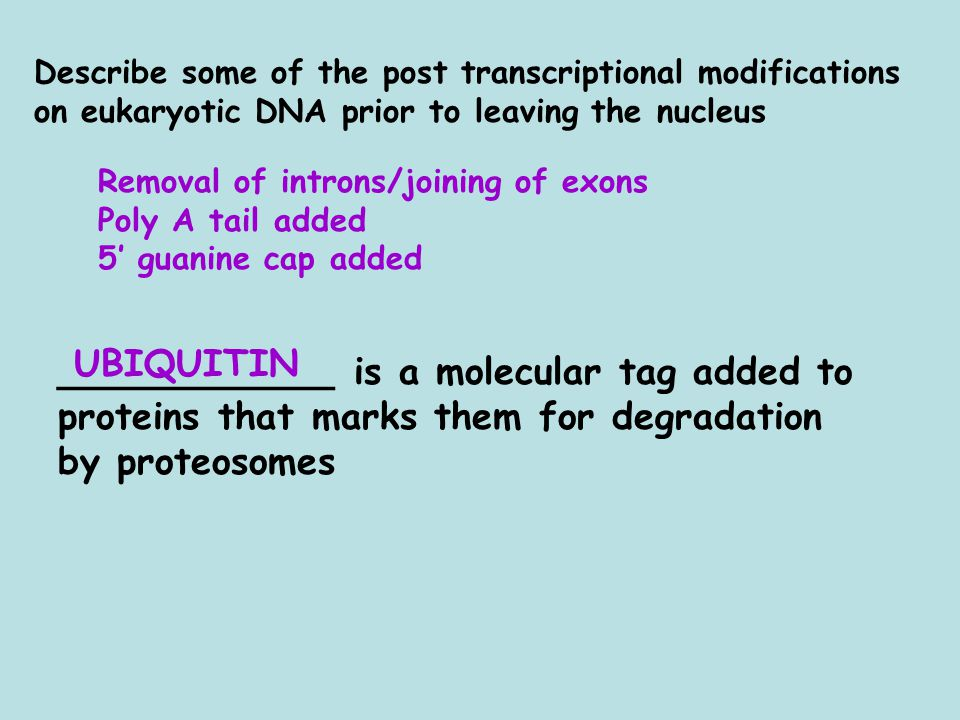 Removal of introns/joining of exons Poly A tail added 5' guanine cap added ____________ is a molecular tag added to proteins that marks them for degradation by proteosomes UBIQUITIN Describe some of the post transcriptional modifications on eukaryotic DNA prior to leaving the nucleus