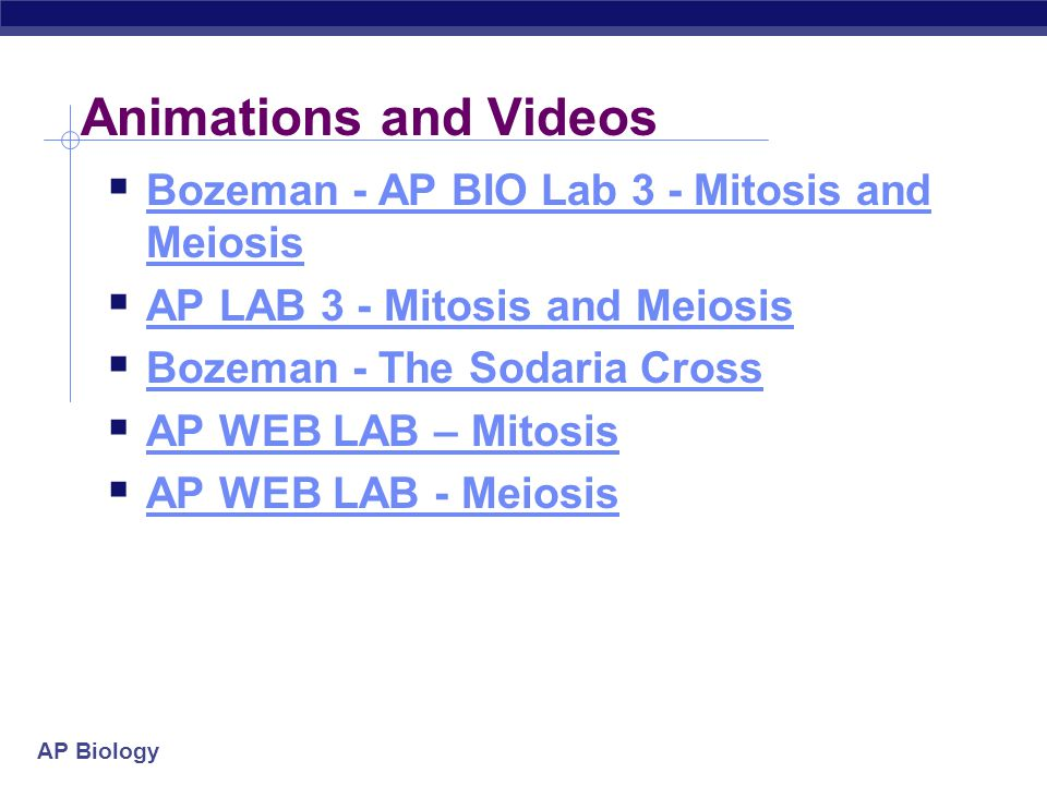 AP Biology Animations and Videos  Bozeman - AP BIO Lab 3 - Mitosis and Meiosis Bozeman - AP BIO Lab 3 - Mitosis and Meiosis  AP LAB 3 - Mitosis and