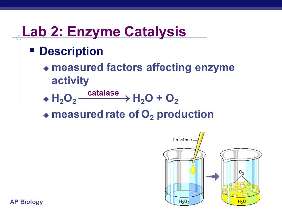 AP Biology 2004-2005 Lab 2: Enzyme Catalysis  Description  measured factors affecting enzyme activity  H 2 O 2  H 2 O + O 2  measured rate of