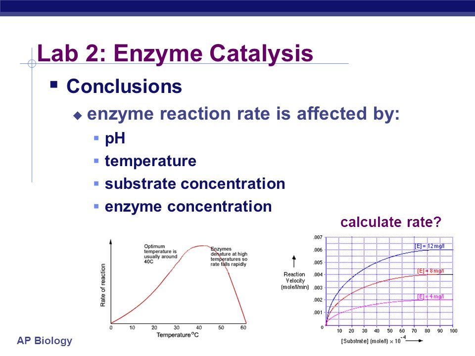 AP Biology 2004-2005 Lab 2: Enzyme Catalysis  Conclusions  enzyme reaction rate is affected by:  pH  temperature  substrate concentration  enzym