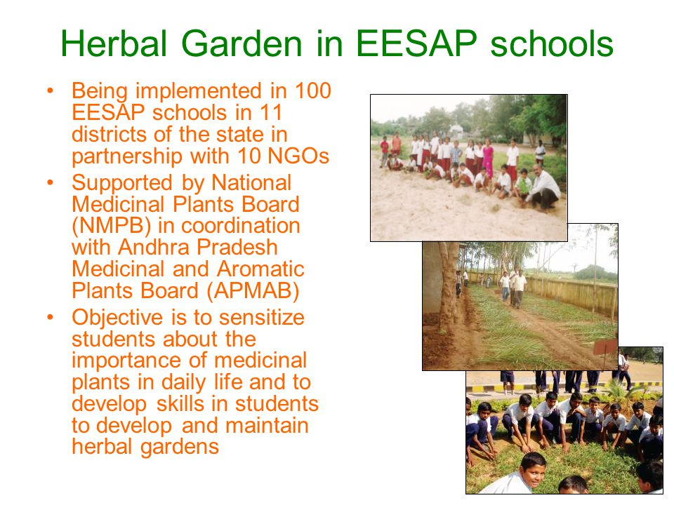 Herbal Garden in EESAP schools Being implemented in 100 EESAP schools in 11 districts of the state in partnership with 10 NGOs Supported by National Medicinal Plants Board (NMPB) in coordination with Andhra Pradesh Medicinal and Aromatic Plants Board (APMAB) Objective is to sensitize students about the importance of medicinal plants in daily life and to develop skills in students to develop and maintain herbal gardens