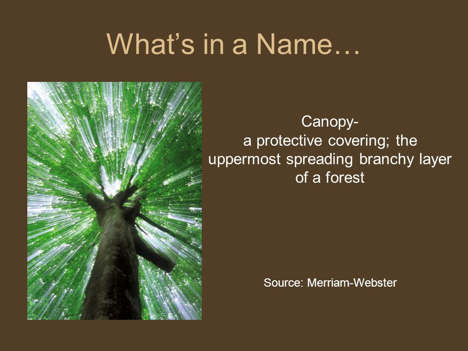 What's in a Name… Canopy- a protective covering; the uppermost spreading branchy layer of a forest Source: Merriam-Webster