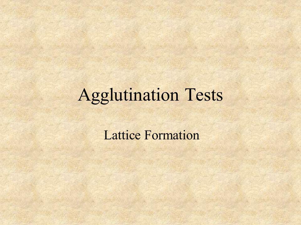Agglutination Tests Lattice Formation