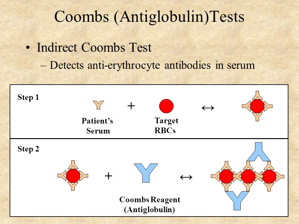 Coombs (Antiglobulin)Tests Indirect Coombs Test –Detects anti-erythrocyte antibodies in serum Patient's Serum Target RBCs + ↔ Step 1 + ↔ Coombs Reagent (Antiglobulin) Step 2