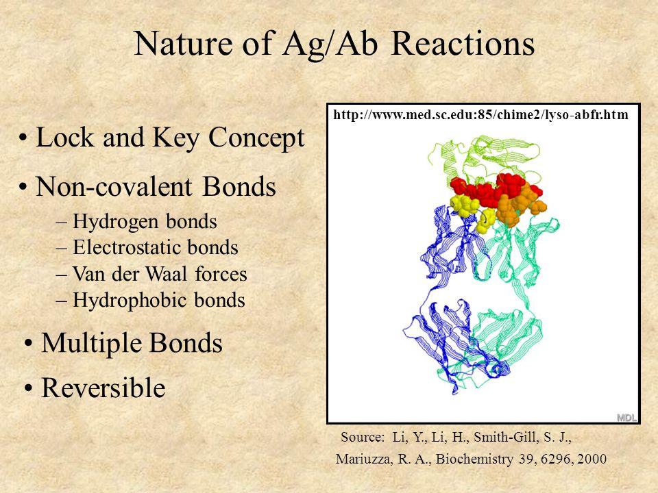 Nature of Ag/Ab Reactions Lock and Key Concept Non-covalent Bonds – Hydrogen bonds – Electrostatic bonds – Van der Waal forces – Hydrophobic bonds Rev